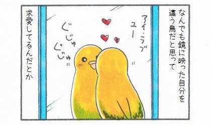 なんでも鏡に映った自分を違う鳥だと思って求愛しているんだとか