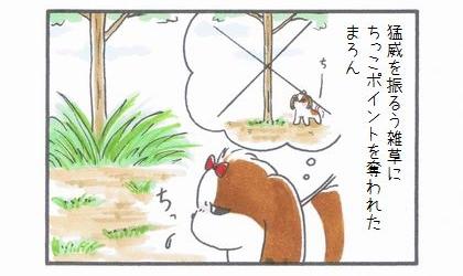 ちっこポイント復活!-1
