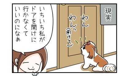 現実:ドアの前で開けてと吠える犬。いちいち私がドアを開けに行かなくていいのになぁ