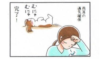 外耳炎のお話☆まろんも喜ぶ通気方法-4