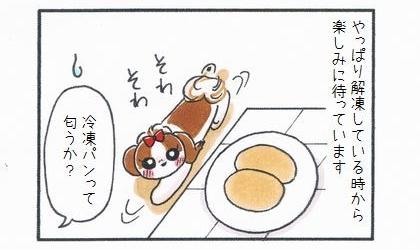 犬はやっぱりパンを解凍している時から楽しみに待っています。パンの近くでウロウロする犬。冷凍パンって匂うか?