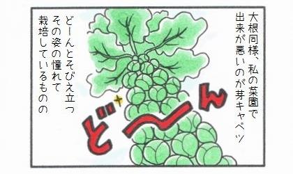 大根同様、私の家庭菜園で出来が悪いのが芽キャベツ。どーんとそびえ立つその姿に憧れて栽培しているものの