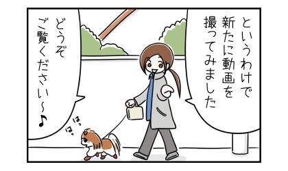 というわけで、新たに犬靴の履かせ方を動画を撮ってみました。どうぞご覧ください~。靴を履いた犬と散歩に出かける飼い主