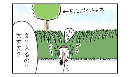 おしっこポイントの木に向かって雑草の中に入っていく犬。え?入るの?大丈夫?