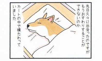 カートに乗った犬 ~久しぶりの再会~-2