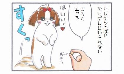 レッサーパンダの風太くん-4