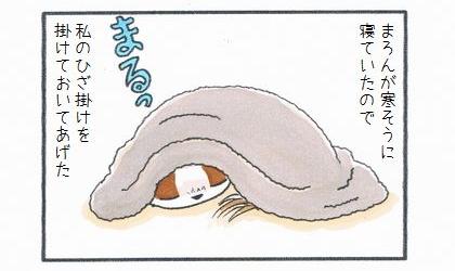 犬が寒そうに寝ていたので、私のひざ掛けをかけておいてあげた