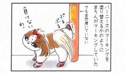 バーニーズ・マウンテン・ドッグに戦いを挑む!-4
