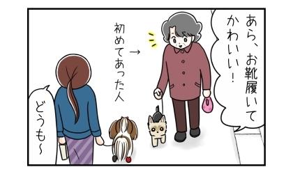 犬の散歩中。ヨーキーを連れた人(初めてあった人)に出会う。あら、お靴履いてかわいい!どうも~