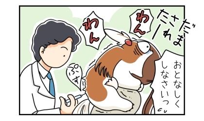 お散歩の行き先は狂犬病予防接種の集合注射の会場だった。だまされたーと吠える犬。おとなしくしなさいっ。獣医さんに狂犬病予防注射をされる犬