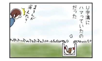 雑草畑で犬が突然消えたと思ったら、U字溝にハマっていたのだった