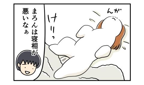 毛布を蹴飛ばして寝る犬。寝相が悪いなあ