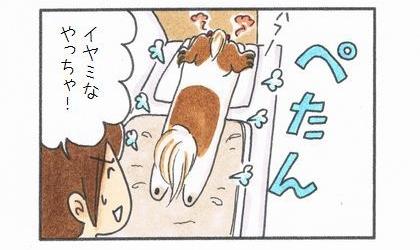 毛布から降りた犬が暑くて伸びる。それを見た飼い主が、イヤミなやっちゃ!