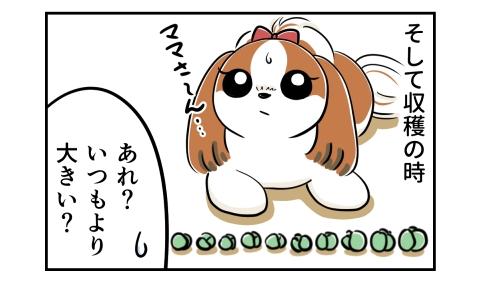 そして収穫の時、採れた芽キャベツはいつもより大きかった。それを見て呆れる犬