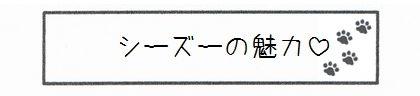 シーズーの魅力-0