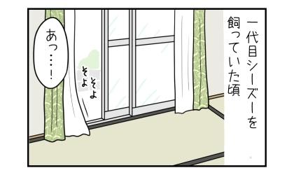一代目シーズーを飼っていた頃。窓が開いた部屋を見て、あっ…!