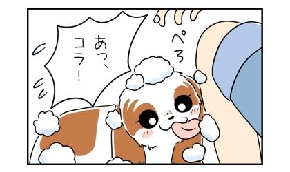 飼い主の膝に飛んだシャンプーの泡をぺろっと舐める犬。あっ、コラ!焦る飼い主