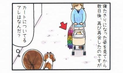 カートに乗った犬 ~みんなの祈り~-1