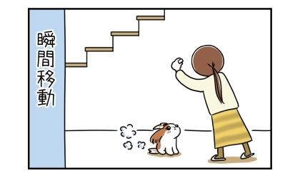 あっという間に階段を下りて飼い主の足元へやってきた犬。瞬間移動