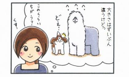 オールド・イングリッシュ・シープドッグ-4