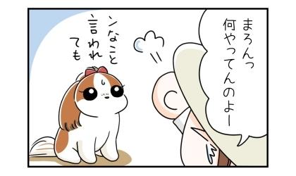 何やってんのよー、犬に八つ当たりする飼い主。そんなこと言われても、と困惑する犬