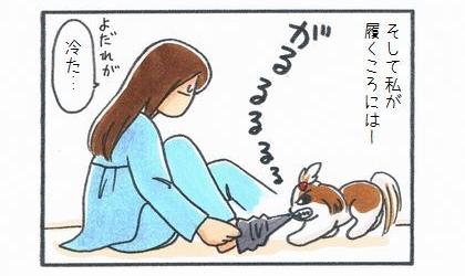 そして私が靴下を履くころには、犬のよだれで冷たくなっている。靴下を咥えて離さない犬