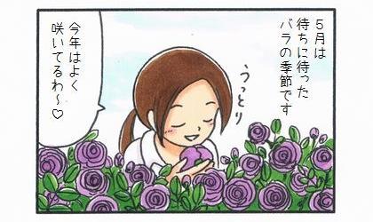 5月は待ちに待ったバラの季節です。庭のバラの香りを嗅ぎながら、今年はよく咲いてるわ~