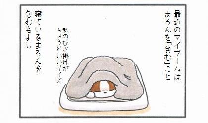 愛犬を「包んで」みよう♪-1