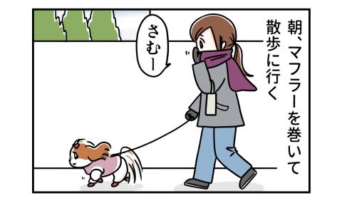 朝、マフラーを巻いて犬の散歩に行く