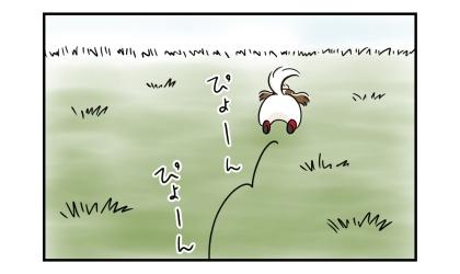 雑草畑を走り回る犬