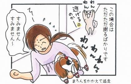 この場合は、ただただ謝るばかりです。犬を抱えて逃走、すみません~。チワワが逃げるのかー、と吠える