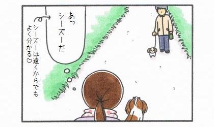 犬の散歩中、向こうから犬が歩いてきた。あっ、シーズーだ(シーズーは遠くからでもよく分かる)