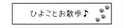 ひよことお散歩-0