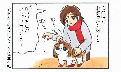 この時期、お散歩から帰ると。ひっつき虫(犬の毛に絡んでくる雑草の種)がいっぱいついてる~、犬の体からむしり取る飼い主