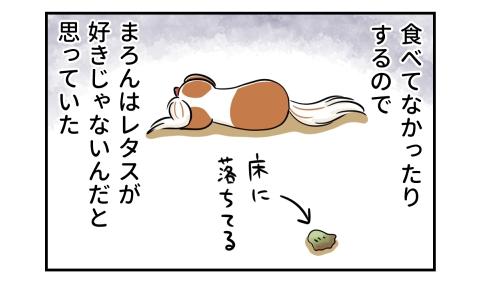 食べてなかったりする(床に落ちてる)ので、犬はレタスが好きじゃないんだと思っていた