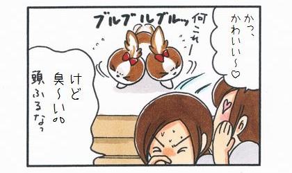 かっ、かわいい~。何これー?ポニーテールにした犬が頭をブルブルッっと振る。けど、臭い。頭振るなっ