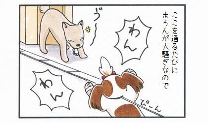 まろん vs 外犬-2