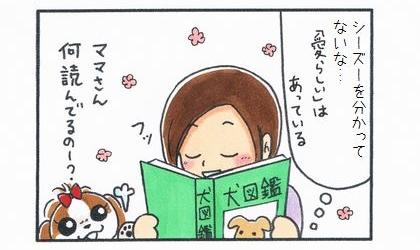 シーズーを分かってないな…愛らしいはあっている。犬図鑑を読みながらほくそ笑むシーズーの飼い主