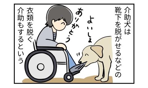 介助犬は靴下を脱がせるなどの衣類を脱ぐ介助もするという。よいしょ、靴下を脱がせる犬。ありがとう、車椅子の人