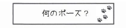 何のポーズ?-0