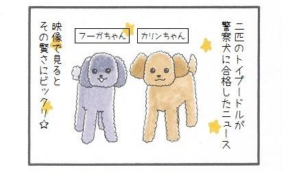 トイプードルに続け☆かわいすぎる警察犬-1