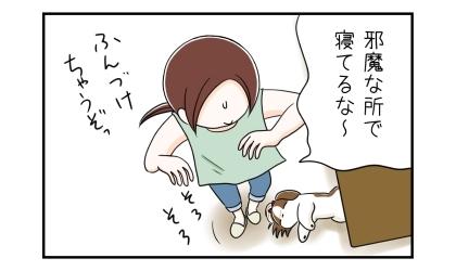 犬が邪魔な所で寝てるな~、踏んづけちゃうぞ