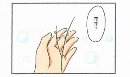 花芽?犬が食べた観葉植物のテーブルヤシを触ってみる