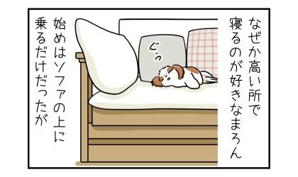 なぜか高い所で寝るのが好きな犬。始めはソファの上に乗るだけだったが