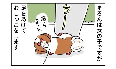 愛犬は女の子ですが、足をあげておしっこをします