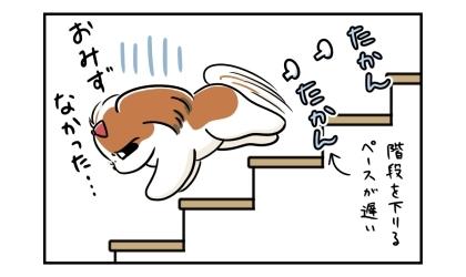 お水なかった…。悲しそうに1階へ降りてくる犬。階段を下りるペースが遅い