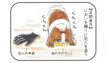 トイプードルに続け☆かわいすぎる警察犬-3