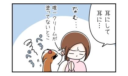 耳にして耳に…。犬が舐めるのは、唯一クリームを塗ってない耳で我慢してもらう