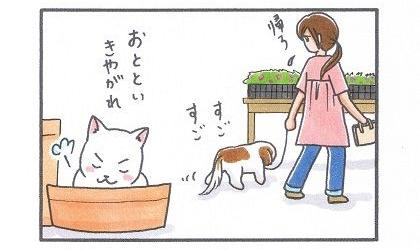 まろん vs 猫 2-2