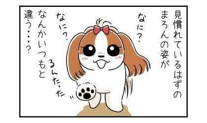 見慣れているはずの犬の姿が、なんかいつもと違う…?